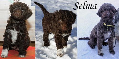 Selma valp-vuxen