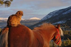 Tibbe og hest