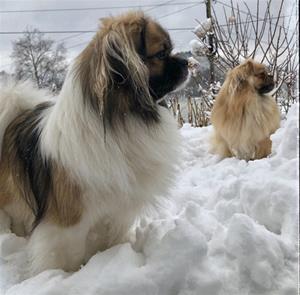 Keiko og Ozzy