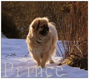 Prince. Eier: Eirin Lohne
