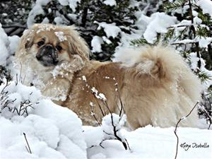 Sedalias Snow Flake