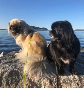 Nova og Pia. Eier Gørill Vetaas