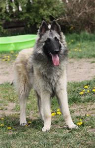 Odetta (14)