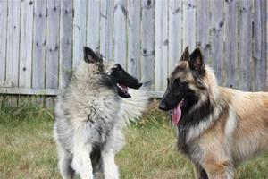 Jax playing with Odetta (2)