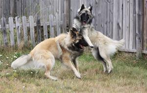 Jax playing with Odetta (3)