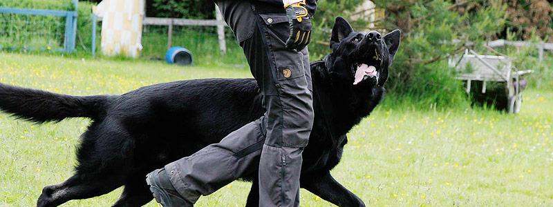 hund25