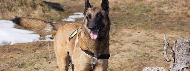 hund28