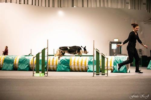 Viper Sthlm hundsportcentrum