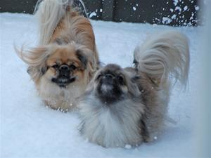 Kayla og Ronia jan-2012