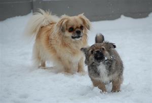 20.01.2010 lek i snøen 093