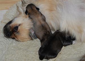 Ronia & Augustvalper født 20.06.2012 053
