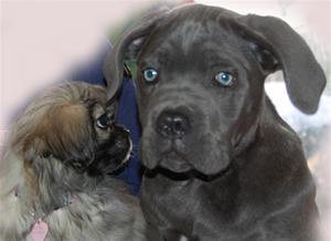 Ronia 11 uker &hundevenner 069