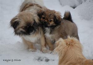 Kayla koser med Sandy sin valp Oliver