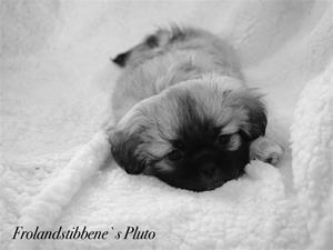 Pluto 8 uker 01