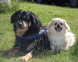 Sommeren 2011 Nicky og Sharco