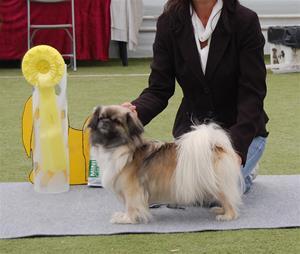 Tibethund 2012 Kayla BIS 3