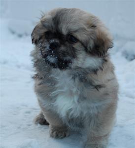 Nicky 8 uker i snø
