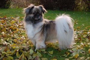 Kayla høsten 2012 025