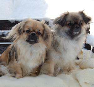 Ronia og Kayla