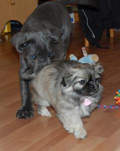 Ronia 11 uker &hundevenner 085