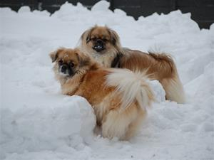Ronia og Cha-Nell feb-2012