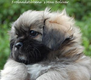 Max-Bolivar