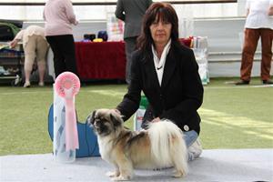 Tibethund 2012 kayla BIS1 Veteran