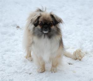 lek i snøen 001