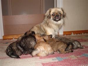 Alfa med sitt kull (3 jenter og 2 gutter) Kaylas mor