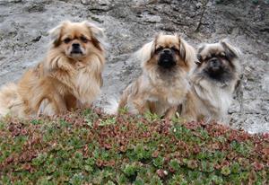 Asterix, Ronia og kayla høsten 2010