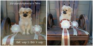 Tibethund Nita