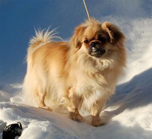Lady i snø