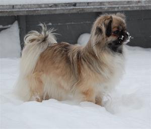 Kayla lek i snøen 057