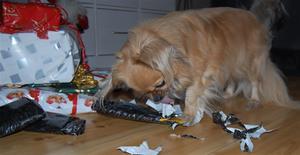 jul2008 038 Gina pakker opp