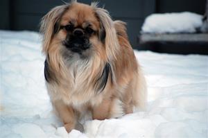 Ronia i snø 2011