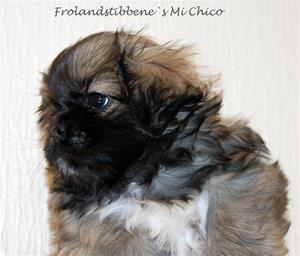 Mi-Chico