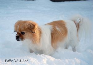 Foffo ( 14 år) 21 jan-2012