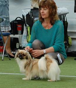 Tibethund Ronia