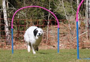 astrid hoop