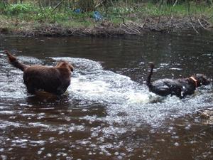 Tippen far fram i vattnet