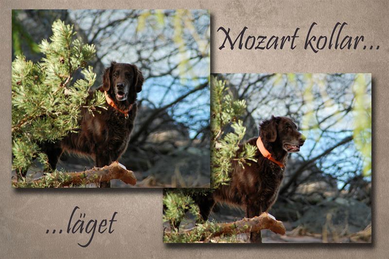 Mozart-kollar