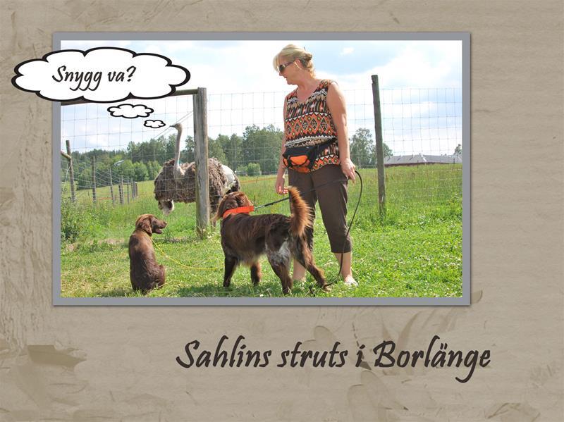 Sahlins-struts3