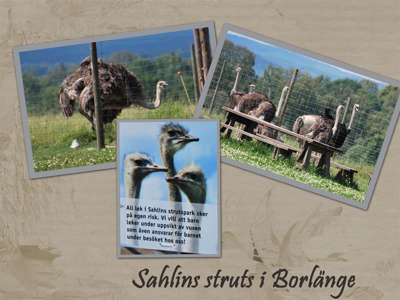 Sahlins-struts-7
