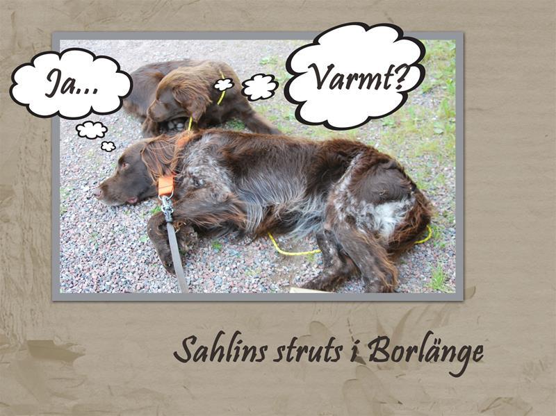 Sahlins-struts-2