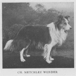 Ch_20Metchley_Wonder_B_1886_sire_of
