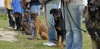 sittandehundar