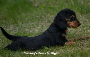 Yodamy's Feels So Right_4