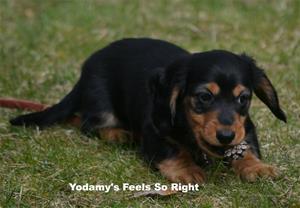 Yodamy's Feels So Right_2