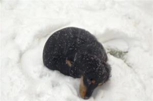 ligga i snön