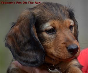 Yodamy's Fox On The Run_7
